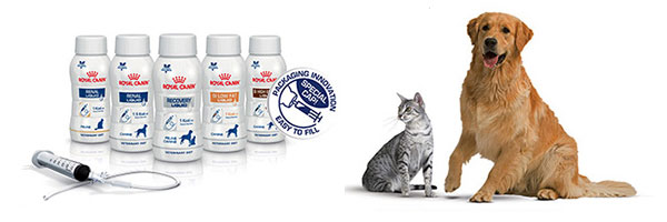 How To Improve Tube Feeding In Cats And Dogs You Ve Got