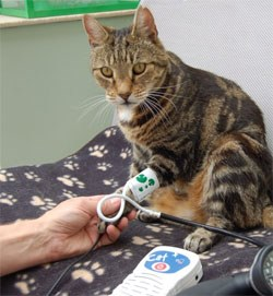 Bildresultat för isfm-hypertension-guideline.jpg-550x0.jpg