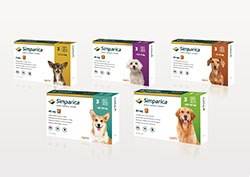 Zoetis has announced the launch of Simparica, a once-monthly oral medication for the treatment of flea, tick and mite infestations in dogs beginning at eight weeks of age.