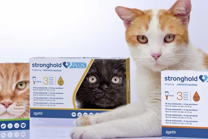 Zoetis Launches Stronghold Plus Spot On For Cats