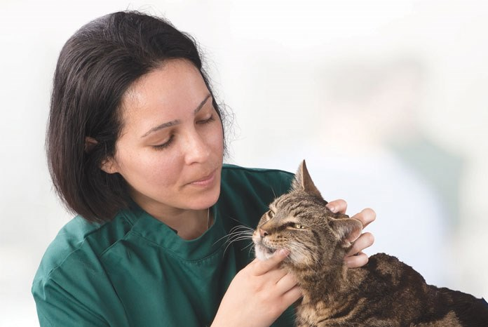 Solihull-based Willows Veterinary Centre has opened a new unit to treat cats with an overactive thyroid.
