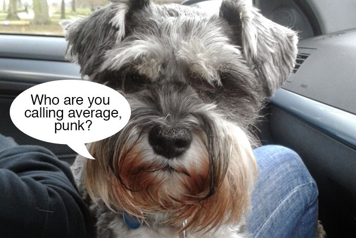 Research published by the Royal Veterinary College in Canine Genetics and Epidemiology has found that the Miniature Schnauzer is one of the most average dog breeds in the UK1,