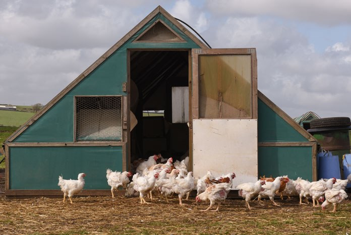 The BVA, the British Veterinary Poultry Association (BVPA) and Veterinary Public Health Association (VPHA) have jointly welcomed a New Code of Practice for the Welfare of Laying Hens and Pullets