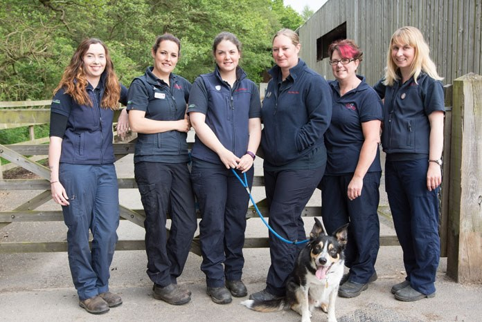 Equine veterinary nurses at Scarsdale Markeaton.