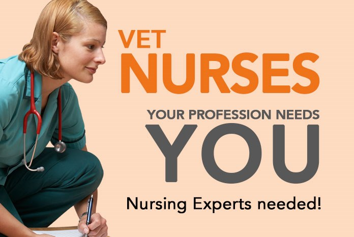 VetNurse.co.uk will shortly be undergoing one of its biggest upgrades since it was first launched in 2020, as part of which, we're now looking for experts in various fields of veterinary nursing to become VetNurse Experts.