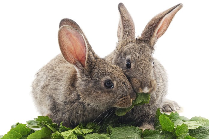 Burgess Pet Care, the organisers of Rabbit Awareness Week (RAW), is thanking veterinary nurses for their help in making this year's campaign the most successful in its 13 year history.