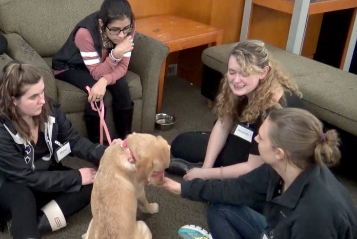 New research from Washington State University - with support from Mars Petcare's Waltham Centre for Pet Nutrition - has revealed that therapy dogs can improve the executive function and cognitive ability of university students at risk of academic stress and failure1.